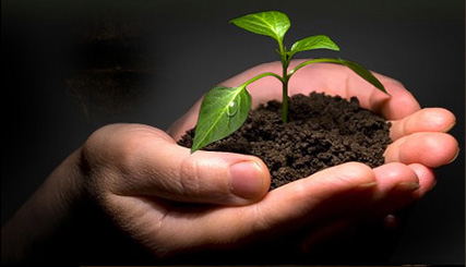 plant a seed wordfromthewell