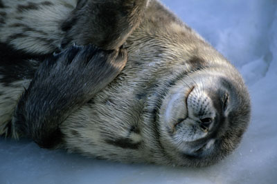 rest day seal