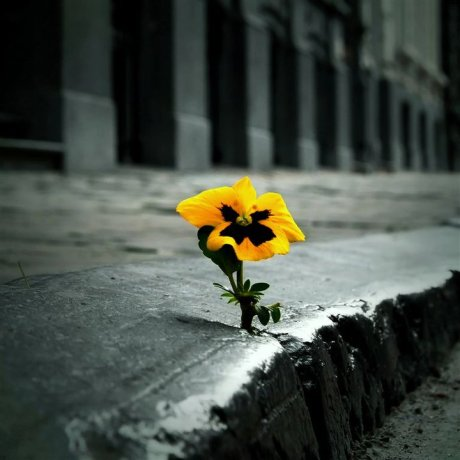 flower-in-sidewalk